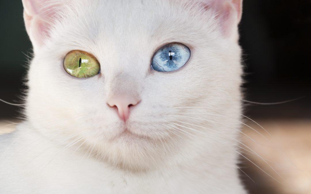 What is Heterochromia?